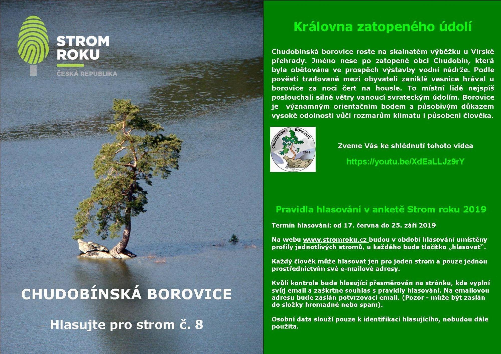 Evropský strom roku - Chudobínská borovice